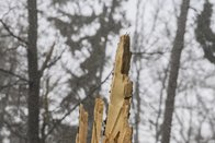 Appel à la prudence dans les forêts
