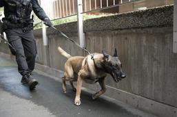 Deux cambrioleuses arrêtées grâce au flair d'un chien