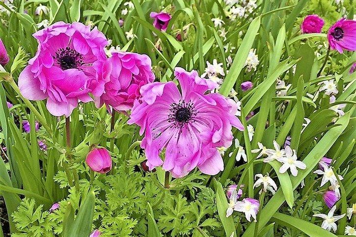 Un jardin fit grâce aux géophytes