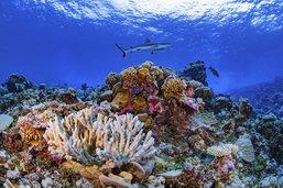 Disparition de 14% du corail dans le monde entre 2009 et 2018